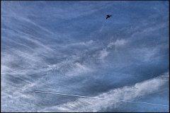 Didier P : L'avion et l'oiseau