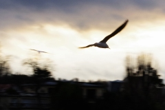 Jacques P : Vol de nuit