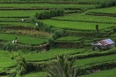 Michel G : Rizières à Bali