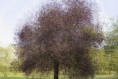 HD-impression-arbre-01