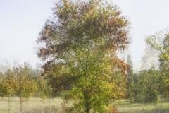 HD-impression-arbre-02