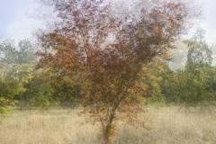 HD-impression-arbre-03