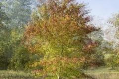 HD-impression-arbre-04
