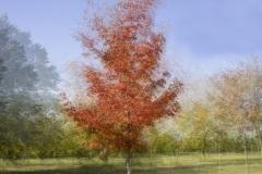 HD-impression-arbre-05