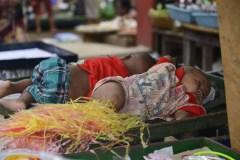 JCR-Enfants-birman-5