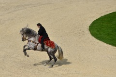PLK-spectacle_equestre-2