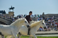 PLK-spectacle_equestre-4
