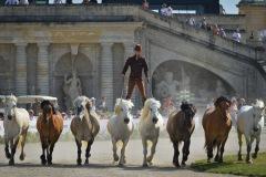 PLK-spectacle_equestre-5