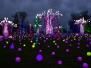 2021-01-JANVIER - Lumières de fête