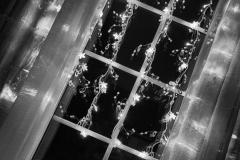 Hilde H : lumières de fêtes