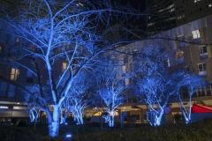 HILDE DSC_0448 arbres bleus