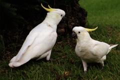 J-L Oiseau 01
