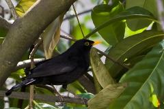 J-L Oiseau 03