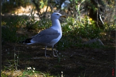 J-L Oiseau 11 - Go & Lent
