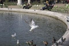 José-Oiseaux-00003