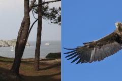 JLB - Pinède + Oiseau