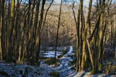 Hilde-H : forêt de Mcy