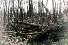 Hilde-H : arbre tombé