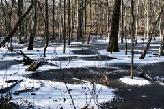 Hilde-H : arbres dans l'eau