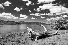 Pierre-P Arbre mort au Lac Yaté