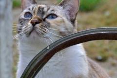 Pierre-P Série Le chat et l'arosoir